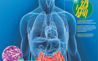 Иммунитет зависит от микрофлоры кишечника? Как восстановить и улучшить микрофлору.