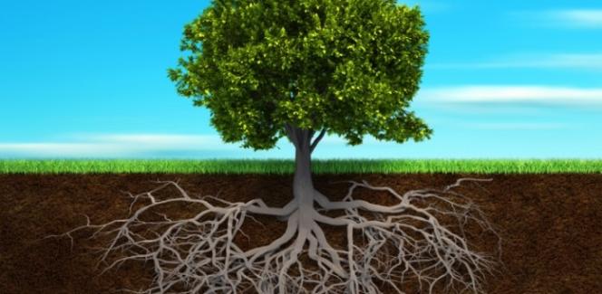 Дерево целей: как построить и пользоваться