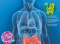 Микрофлора кишечника человека - восстановление и улучшение микрофлоры