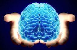 Мозг в твоих руках