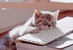 Котику скучно